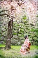 前撮り 桜5.jpg